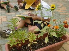 植物の観察中