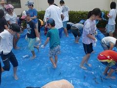 子どもたちがプールに入ってあまごを手づかみしています。
