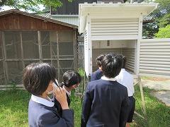 百葉箱を使って気温の変化を調べました
